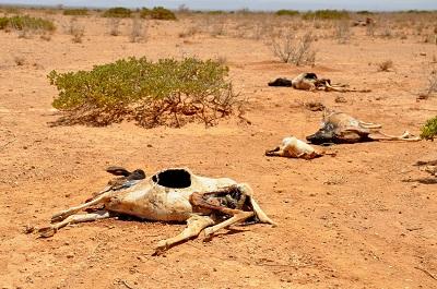 기후변화로 난민 속출한 사하라 남부에 450조 투자