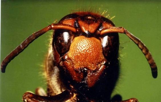곤충 눈 모사한 카메라 렌즈