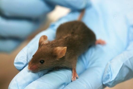 '생쥐'없이 암 정복은 먼나라 얘기