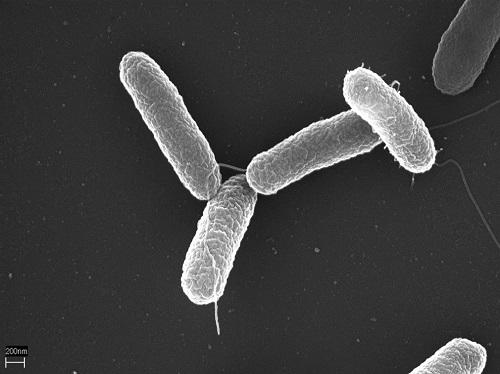 내성 걱정없이 슈퍼박테리아 없애는 방법 나왔다