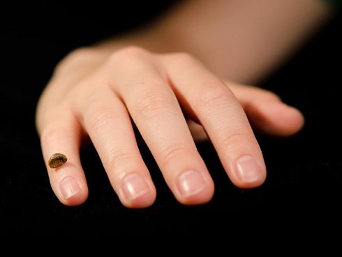 러시아 알타이산맥 데니소바 동굴에서 발굴한 인류(여자아이)의 손가락 뼈. 이 작은 뼈에서 얻은 불과 30밀리그램의 시료에서 추출한 DNA로 게놈을 해독했다. - 막스플랑크연구소 제공