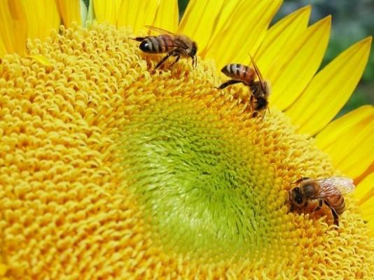 꿀벌이 가장 힘든 계절은?