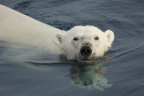감자부터 북극곰까지 15년간 게놈클럽 회원 240명 넘어
