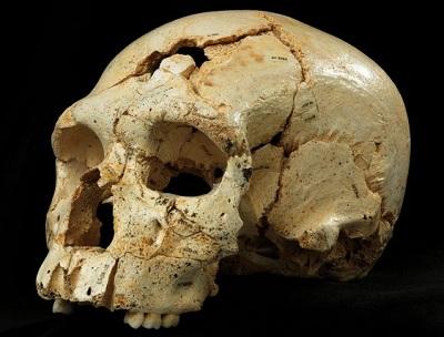 네안데르탈인 직계조상 두개골 발견