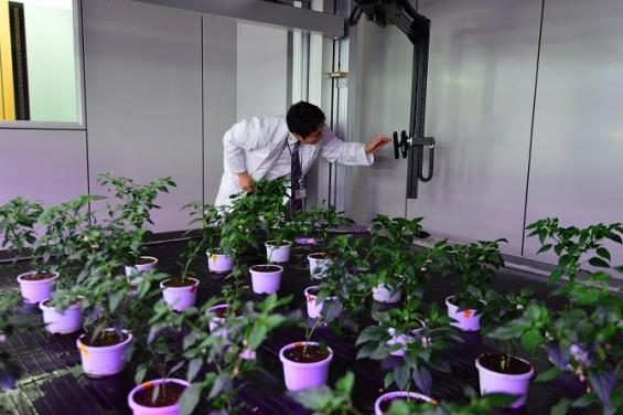 최첨단 식물 공장, KIST 강릉분원을 가다