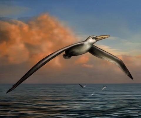 날개만 6m, 세상에서 가장 큰 새