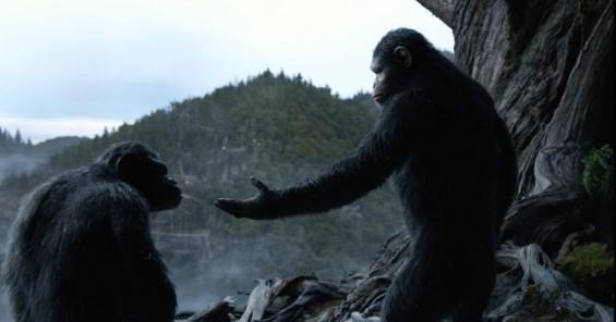 영화 '혹성탈출' 침팬지 vs 실제 침팬지