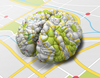 뇌 지도에도 축적이 있다. 뇌를 전체적으로 보는 지도는 세밀한 부분에 대한 정보를 얻기 어려운 대신 영역별 기능을 볼 수 있다. 반면 뇌의 세부를 보는 지도는 신경세포의 정확한 배치를 파악하여 연결 상태를 세세하게 확인할 수 있다. - shutterstock.com 제공