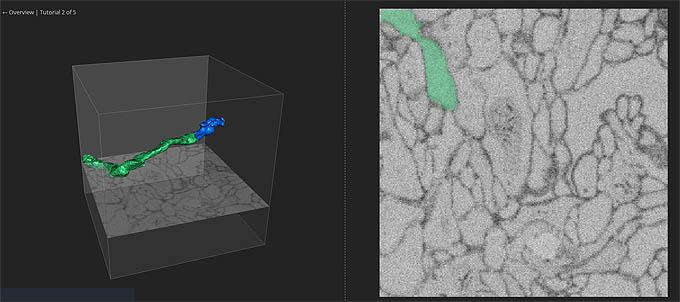 eyewire 게임화면. 뇌세포 영상을 실제로 연결해 보는 형식으로 구성돼 있다. - eyewire.org 제공