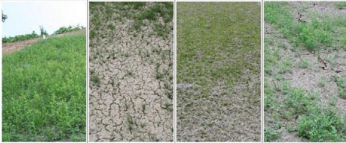 토사구간 현장 적용 60일 경과 후 모습. 생태복원 녹화기술을 적용한 구간(왼쪽에서 첫 번째)이 기존 공법이 다른 공법에 비해 녹화속도가 월등히 빠른 것을 알 수 있다. - 한국지질자원연구원 제공