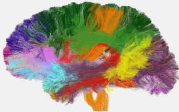 백질 신경섬유 다발의 구조를 렌더링한 이미지. 유럽과 미국을 중심으로 인간의 뇌를 세세하게 분석하여