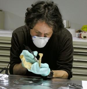 영국 옥스퍼드대의 고고학자인 탐 하이엄 교수는 기존 방사선탄소연대측정법의 문제점을 파악하고 이를 개선한 방법으로 고인류학의 시대를 바로잡고 있다. 최근 연구결과에 따르면 네안데르탈인의 멸종시기는 4만여 년 전으로 수정돼야 한다. - 네이처 제공