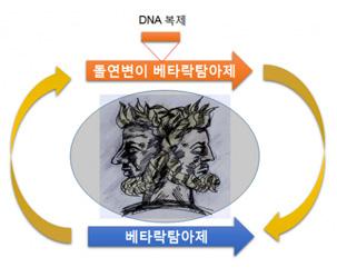 슈퍼박테리아 만드는 '카멜레온 유전자' 찾았다