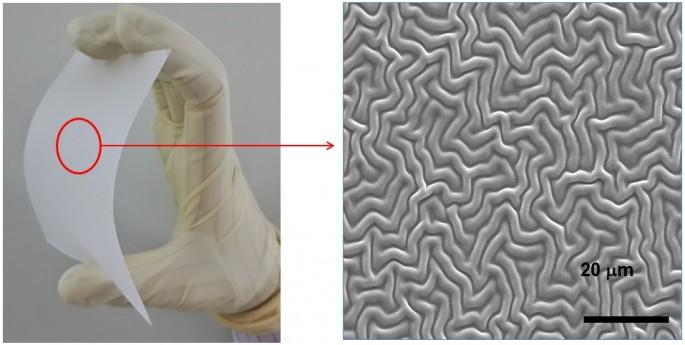 ETRI는 OLED 조명기술이 국제표준으로 선정됐다고 11일 밝혔다. 사진은 ETRI가 개발한 OLED 외부광 추출 필름의 모습. - 한국전자통신연구원 제공