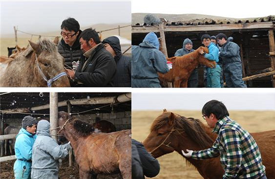 몽골현지에서 진행된 임상시험 - 한국생명공학연구원·고려대 제공