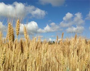 농작물이 지구 이산화탄소 순환에 미치는 영향 ↑