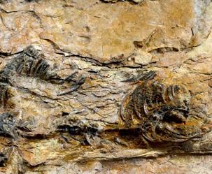 '포악한 거대 육식공룡' 수각류에 대한 3가지 오해