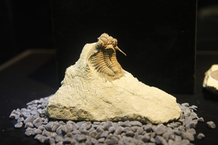 마치 살아있는 것처럼 생생한 화석이 포함된 암석 전시물 - 이우상 기자 제공