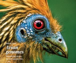 앵무새 뇌에는 노래 유전자가 3개