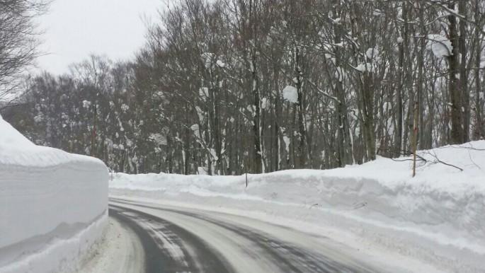 아오모리 핫코다 산으로 들어서는 차량로. 주변에 키보다 더 높게 눈이 쌓여 있다.