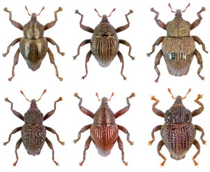 무엇이 무엇이 똑같을까, 신종 딱정벌레 98종 발견
