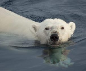 [북극으로 가는 '제2 쇄빙선'] 북극 전용 쇄빙선 2020년 취역한다