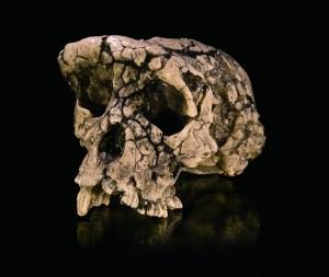 사헬란트로푸스 차덴시스의 두개골 화석본 - 과학동아 제공