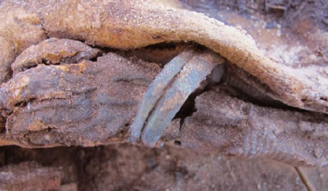 손목에 팔찌를 착용한 18개월 여아의 시신. 건조한 환경 탓에 훼손되지 않고 미라로 발견됐다. - 과학동아 제공