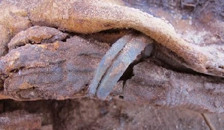 미라 100만 구 묻힌 거대 묘지 발견