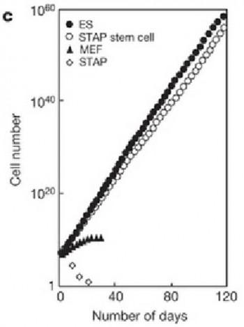 오보카타 박사는 120일 동안 3일 간격으로 배아줄기세포(검은 점)와 STAP 세포(흰 점)의 수를 세어 그래프를 그렸다고 주장했지만, 그는 이 기간에 출장으로 실험실을 비우기도 했다. - 네이처 제공