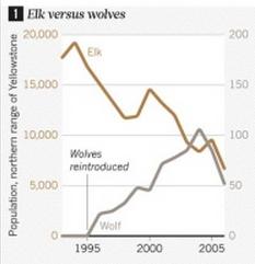 1995년 옐로스톤국립공원에 늑대가 복원된 뒤 엘크 개체수(왼쪽)와 늑대 개체수(오른쪽)의 변화 추이. 늑대복원이 생태계에 얼마나 영향을 미쳤는가에 대해서는 의견이 엇갈리고 있다.  - 네이처 제공