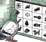 비둘기의 학습법, 사진 128장 '16가지 범주로 분류'