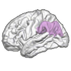 필로폰 맞은 청소년 뇌가 어른보다 더 심각하게 망가진다
