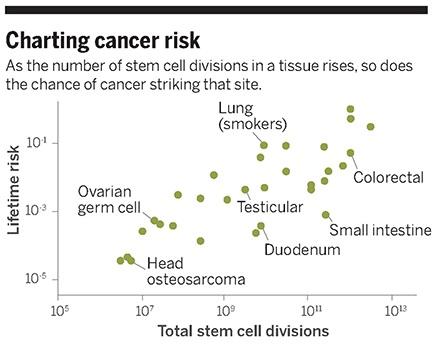 31가지 암에 대해 일생에 걸친 해당 조직의 줄기세포 분열 횟수(로그척도, 가로축)와 암 위험도(로그척도, 세로축)의 관계를 나타낸 그래프. 한 눈에 봐도 비례관계임을 알 수 있는데 상관계수가 0.8에 이른다. 즉 세포분열횟수가 많은 조직일수록 암이 생길 확률도 높다는 말이다. - 사이언스 제공