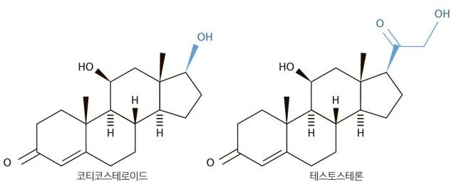 닮은 듯, 안 닮은 듯(같은 스테로이드계열로 생김새는 비슷하지만 효과는 천차만별이다. 코티코스테로이드는 약국에서 쉽게 처방받을 정도로 가벼운 증상에 사용되지만 테스토스테론은 은밀한 도핑의 단골소재다.) - 과학동아 제공