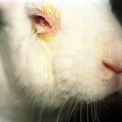 동물실험 대체할 바이오칩 개발 가능해졌다