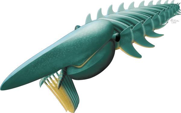 지구 역사상 가장 거대한 절지동물 아에기로카시스가 발견됐다. 크기는 2.1m에 이를 것으로 추정. - 네이처 제공