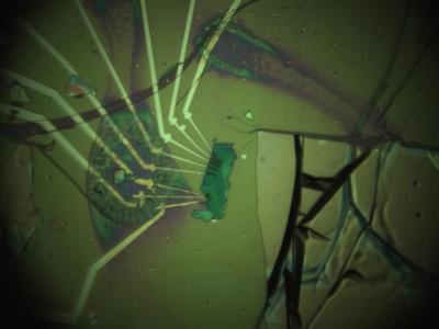유원종 교수팀이 만든 초박형 반도체. 세로 길이는 10마이크로미터로 미세먼지 크기와 비슷하다. - 성균관대학교 제공