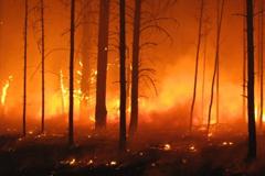 작은 불씨가 숲을 태울 확률은?