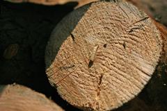 소나무 재선충병 방제 현장을 가다