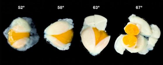 1_조리 과정에서 물의 온도에 따라 달걀의 상태가 민감하게 영향을 받는다. 단백질의 변성과 엉킴에 미치는 영향이 다르기 때문이다. - Modernist Cuisine  제공