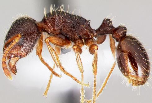 '뉴요커 개미'는 정크푸드 좋아해