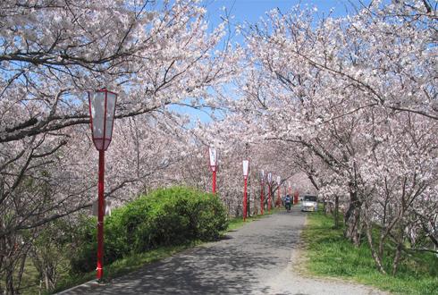 벚꽃축제 가기 전 알아두면 좋은 상식 5가지