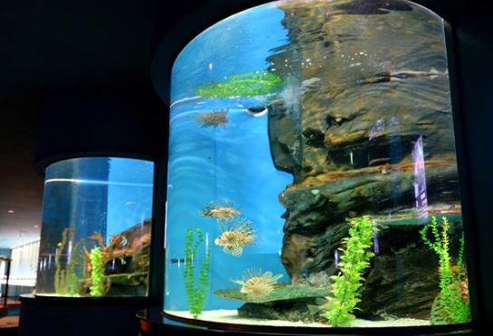 [법성포에서 원자력을 만나다2] 에너지로 키워 낸 한반도의 물고기들, 한빛 에너지 아쿠아리움