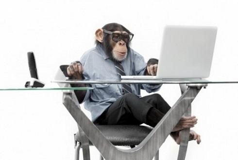 원숭이와 침팬지, 누가 미로 탈출 잘하나