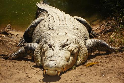 현존하는 세상에서 가장 큰 동물들을 소개합니다