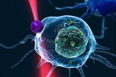 백혈구 위치 초당 60번 확인… 세포단위 검사·치료 가능해졌다
