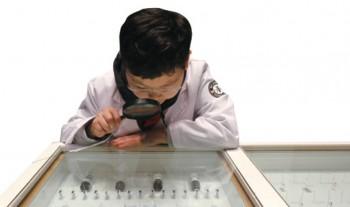 다양한 개미들을 관찰하는 장관우 명예기자. - 어린이과학동아 제공