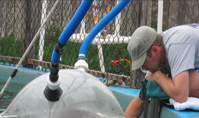 NOAA 연구팀이 돌고래 수조에 후드를 설치하고 산소 소비량을 측정하고 있다.  - NOAA 제공