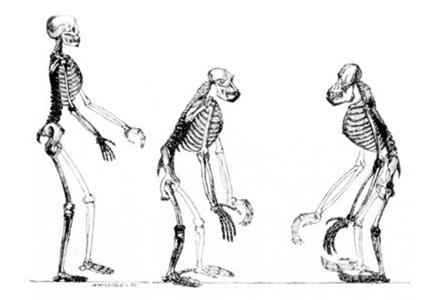 내 안에 침팬지 척추뼈 있다